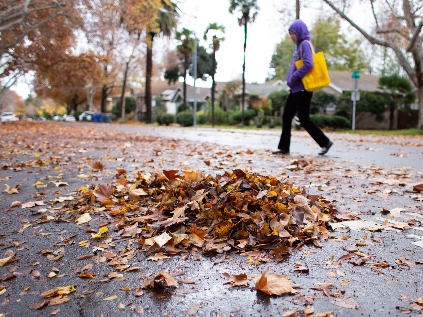 Leaf Blowers Could Be Banned In Sacramento On Bad Air Days