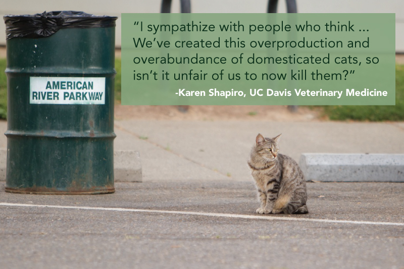 Feral-cat-quote