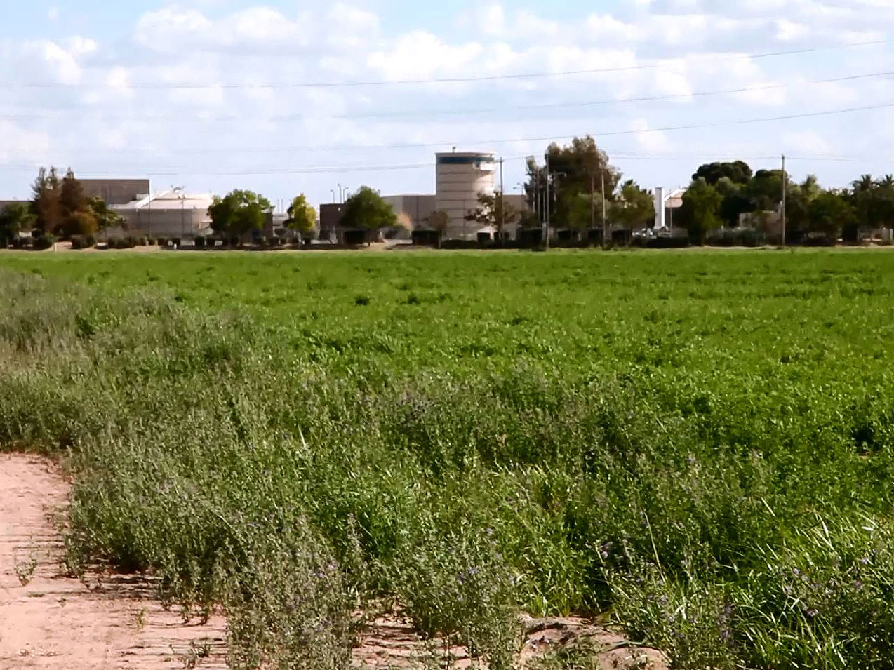 0625-alfalfa -farm -across -the -street -P