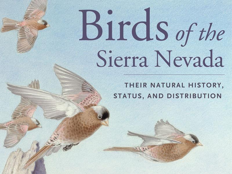 Birds Of The Sierra Nevada - capradio.org