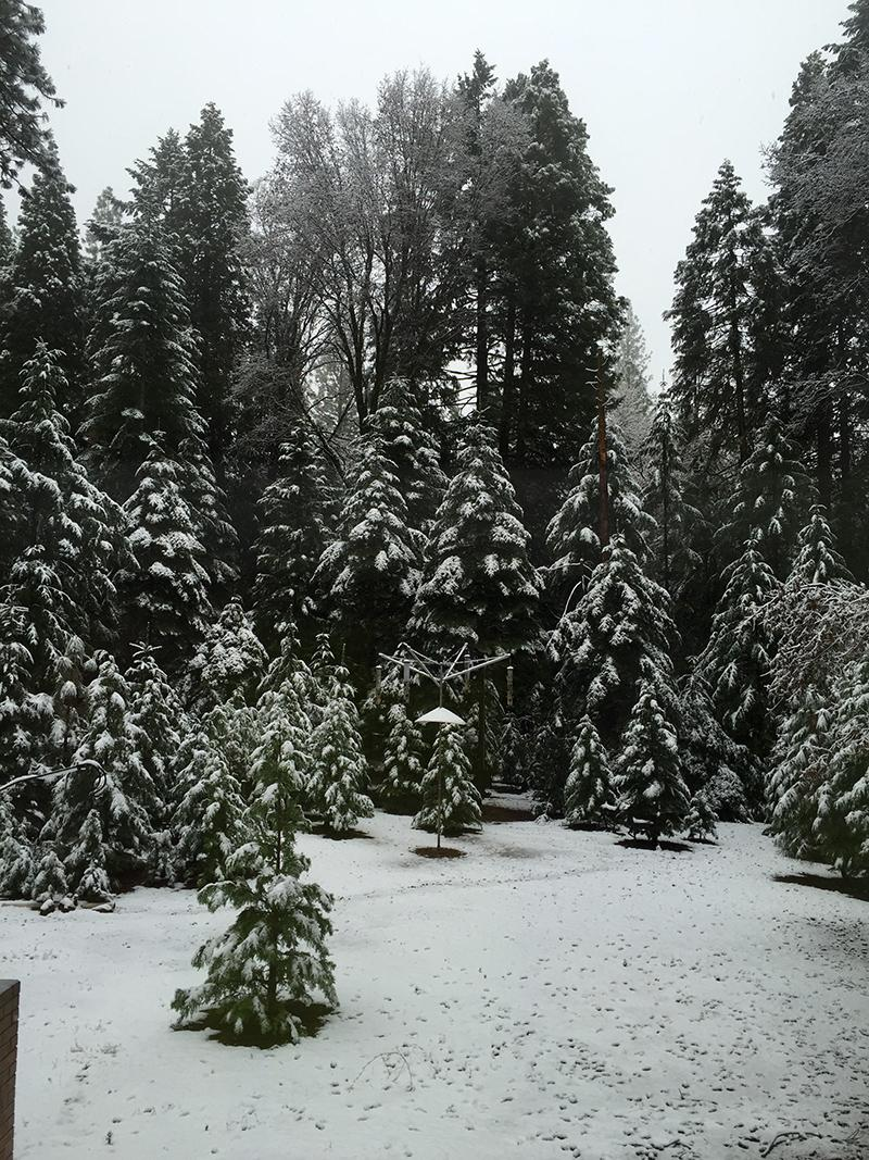 1212 Nevada County Snow