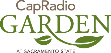 Cap Radio _Garden _PRINT_Color
