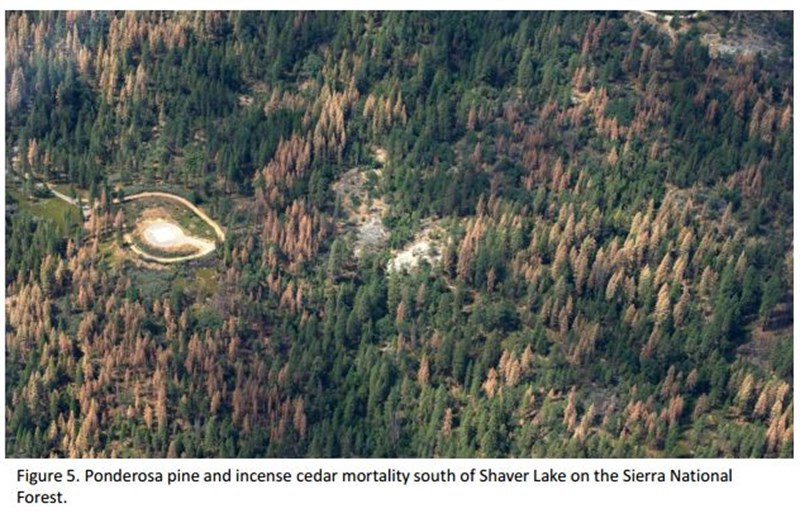 Aerial Detection Survey South Sierra Foothills July 6 - 10 Figure 5