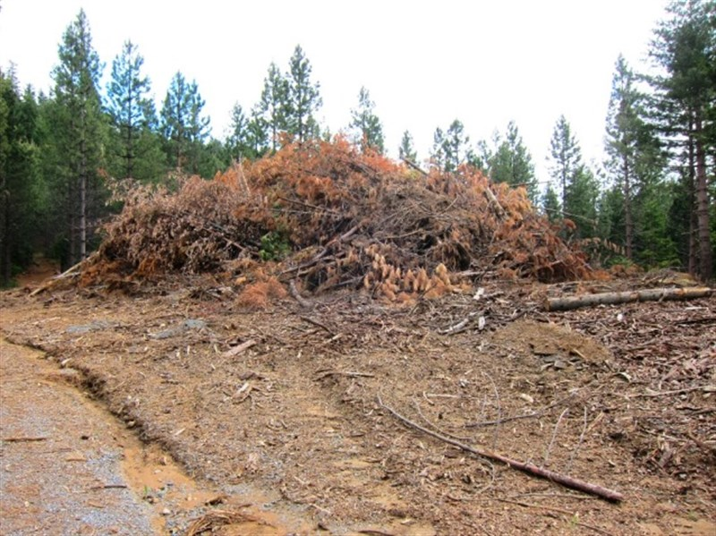 biomass slash pile