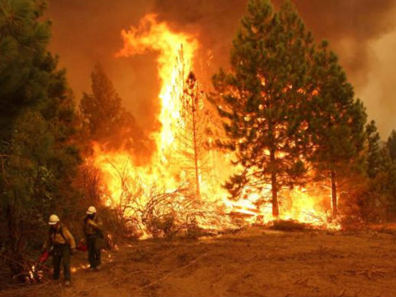 Photo courtesy USFS - Mike McMillan